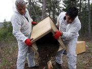 """""""Kırmızı karıncalar"""" zararlı böceklerle mücadele için yollarda"""