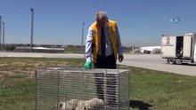 Havalimanına giren köpekler için özel tim