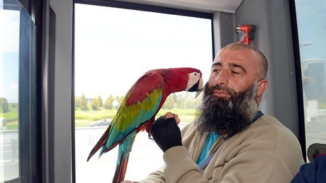 Metrobüste 'Allah' diyen papağan