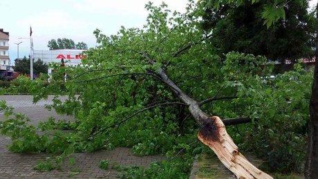 Ordu'da şiddetli rüzgar kivi bahçelerine zarar verdi