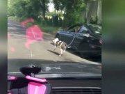 Köpeğini arabayla gezdiren sürücü tepki çekti