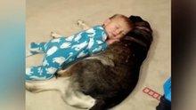 Köpeği yastık yapan bebiş