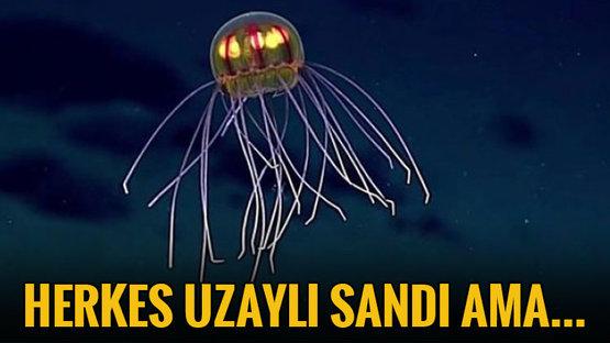 PASİFİK'TE KEŞFEDİLDİ