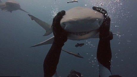 Köpekbalığını kucaklayan cesur dalgıç