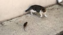 Fare kediyi böyle kovaladı