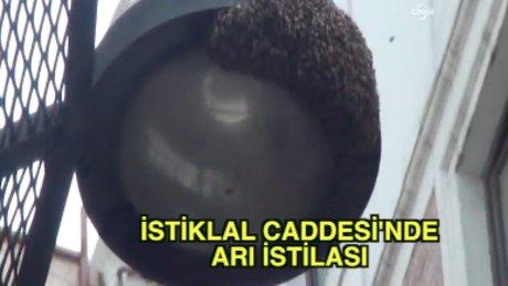 İstiklal Caddesi'nde arı operasyonu