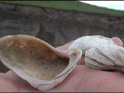 Ermenistan sınırındaki Akyaka'de deniz kumu ve kabukları şaşırttı