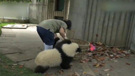 Pandalar görevliye ızdırap oldu
