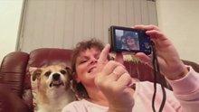 Selfie pozu veren köpek