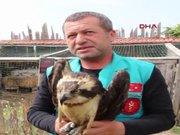 Finladiya'da halkalanan balık kartalını Burdur'da vurdular