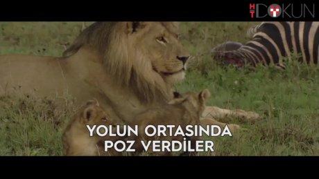 Yeni aslanlı yol