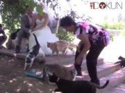 1100 Kedili düğün