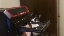 CD-rom gören masum kedi