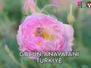 Gül'ün anavatanı Türkiye