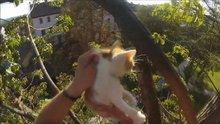 /video/haber/izle/agacta-mahsur-kalan-yavru-kedileri-kurtardi/186434