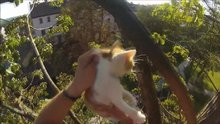 Ağaçta mahsur kalan yavru kedileri kurtardı!