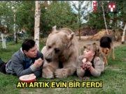 Ev ayısı: 136 kiloluk sevgi topu