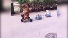 Köpekler üç tekerlekli trende!