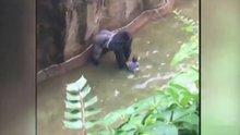 4 yaşındaki çocuk goril kafesine düştü