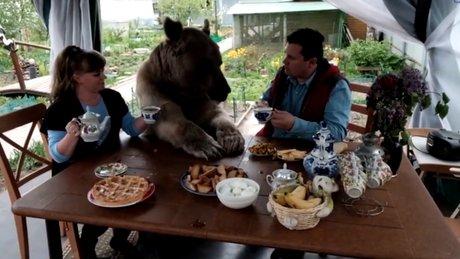 Ayı ile aynı masada yemek yiyen aile