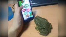 Kurbağa ile oyun olmaz!