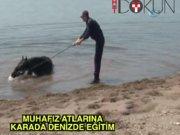 Muhafız Alayı atları Bursa'da eğitiliyor
