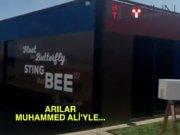 Muhammed Ali'yi arılar sardı