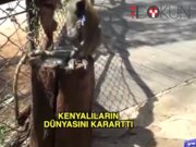 Kenya'da bir maymun tüm elektriği kesti