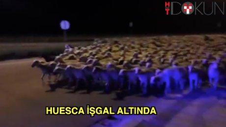 Huesca'da koyun istilası