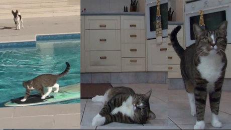 Sahibinin komutlarını yerine getiren kedi