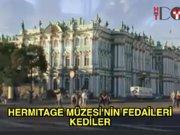 Hermitage Müzesi'ni 50 kedi koruyor