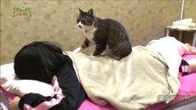 Tüm yorgunluğu alan kedi masajı
