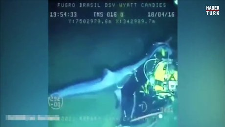 Kılıç balığının dalgıca saldırı anı kamerada