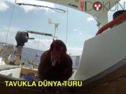 Yol arkadaşı tavukla dünya turu