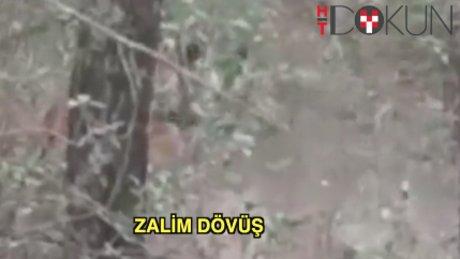 Kaplanla leoparın amansız dövüşü