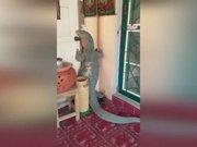 Dev kertenkele eve girerken yakalandı