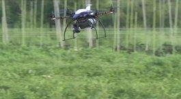 Dronelar böcek öldürecek