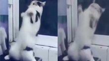 Oyun havasıyla oynayan kedi