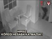 Hırsız köpeği hesaba katmazsa!