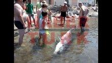 Yunus balığı ölü bulundu