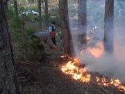 Çine'de orman yangını