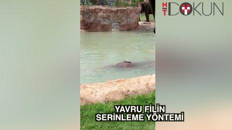 Yavru fil havuz sefasıyla serinledi