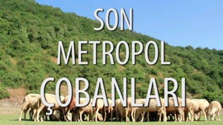 Onlar metropolün son çobanları