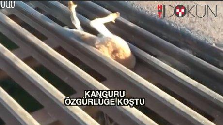 Kanguru kurtarma operasyonu