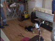Çekyatın altından onlarca kedi çıktı!