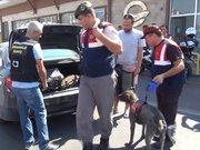 Çanakkale'de feribottan inen araçlar dedektör köpek ile aranıyor