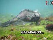 Saklı Cennet: Galapagos