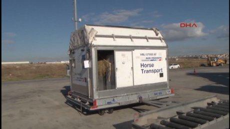 Milyon dolarlık atlar uçakla İstanbul'a getirildi