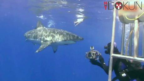 Köpek Balığıyla Selfie