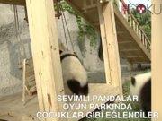 Pandalar oyun parkında eğlendi